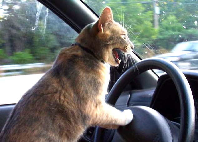 I told you I can't drive a stick!
