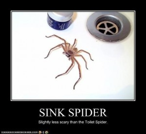 Apparently this sight  casts terror into the hearts of creatures that outweigh the spider a few thousand times over AND have control of the faucet.