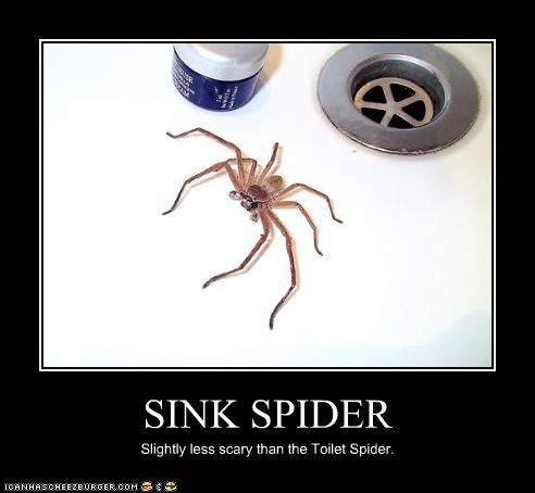 Spiderhugger Backyard Arachnology